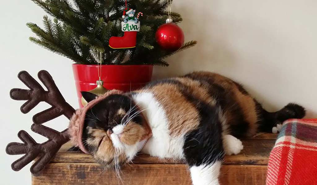 Perfect Christmas Gifts and Decorations for Pets