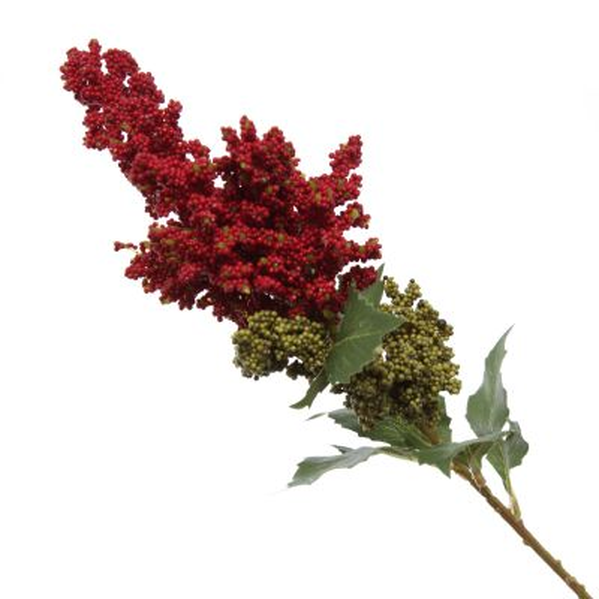 Mini Berry Native Bush Christmas Red Berry Spray